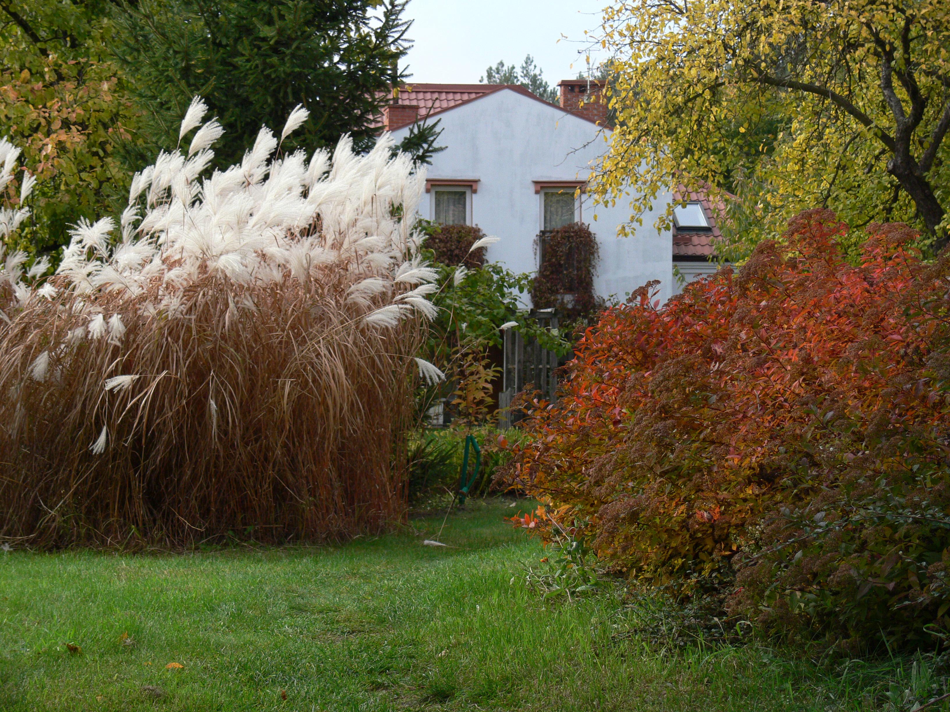 Andrzejówka - widok z ogrodu